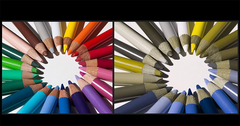 Come vede un daltonico?