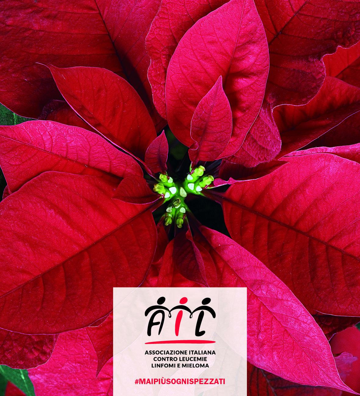 Stella Di Natale Ail 2021.Ail Torna L Appuntamento Con La Solidarieta Delle Stelle Di Natale Il 5 6 7 E 8 Dicembre Sanita Informazione